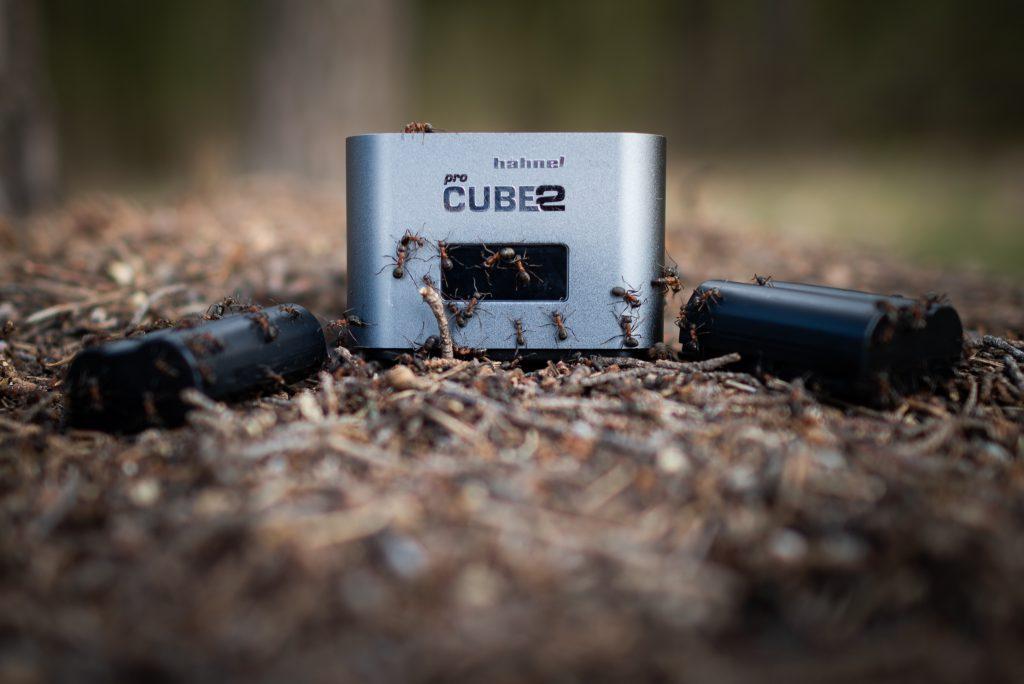 Mrówki wchodzące na ładowarkę Hahnel Pro Cube 2