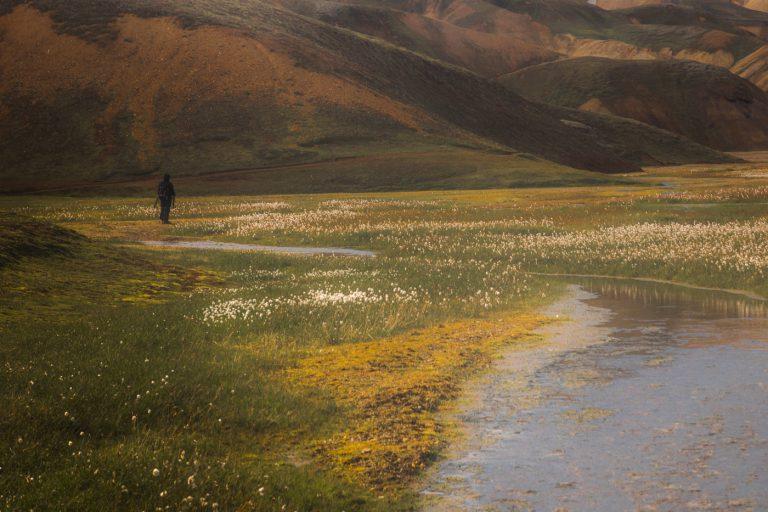 Człowiek przemierzający łąki islandzkiego interioru